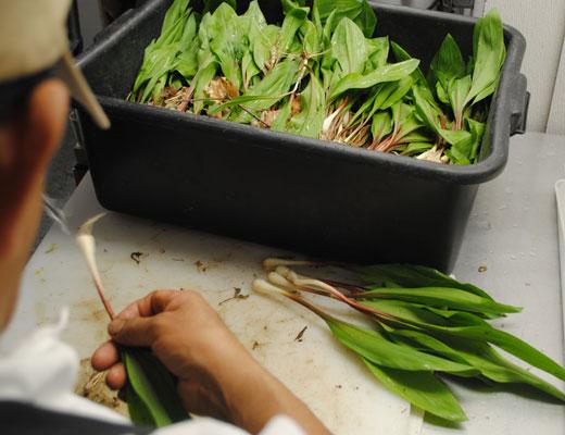 chef preparing fresh ramps